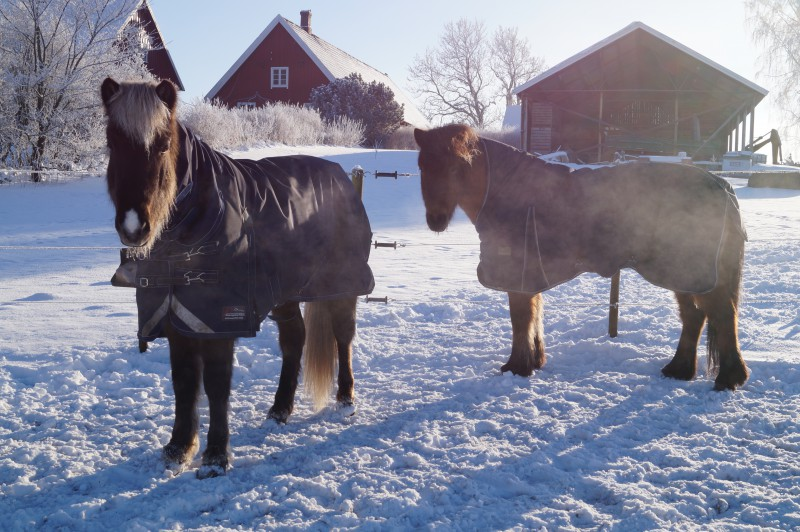 Amanda Olsson Långberg vinter